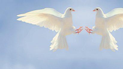 Doves against blue sky