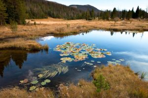 The headwaters of the Colorado River are in a marshy meadow in Rocky Mountain National Park. Photo by Ted Wood.