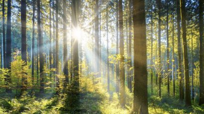 sunllight in forest