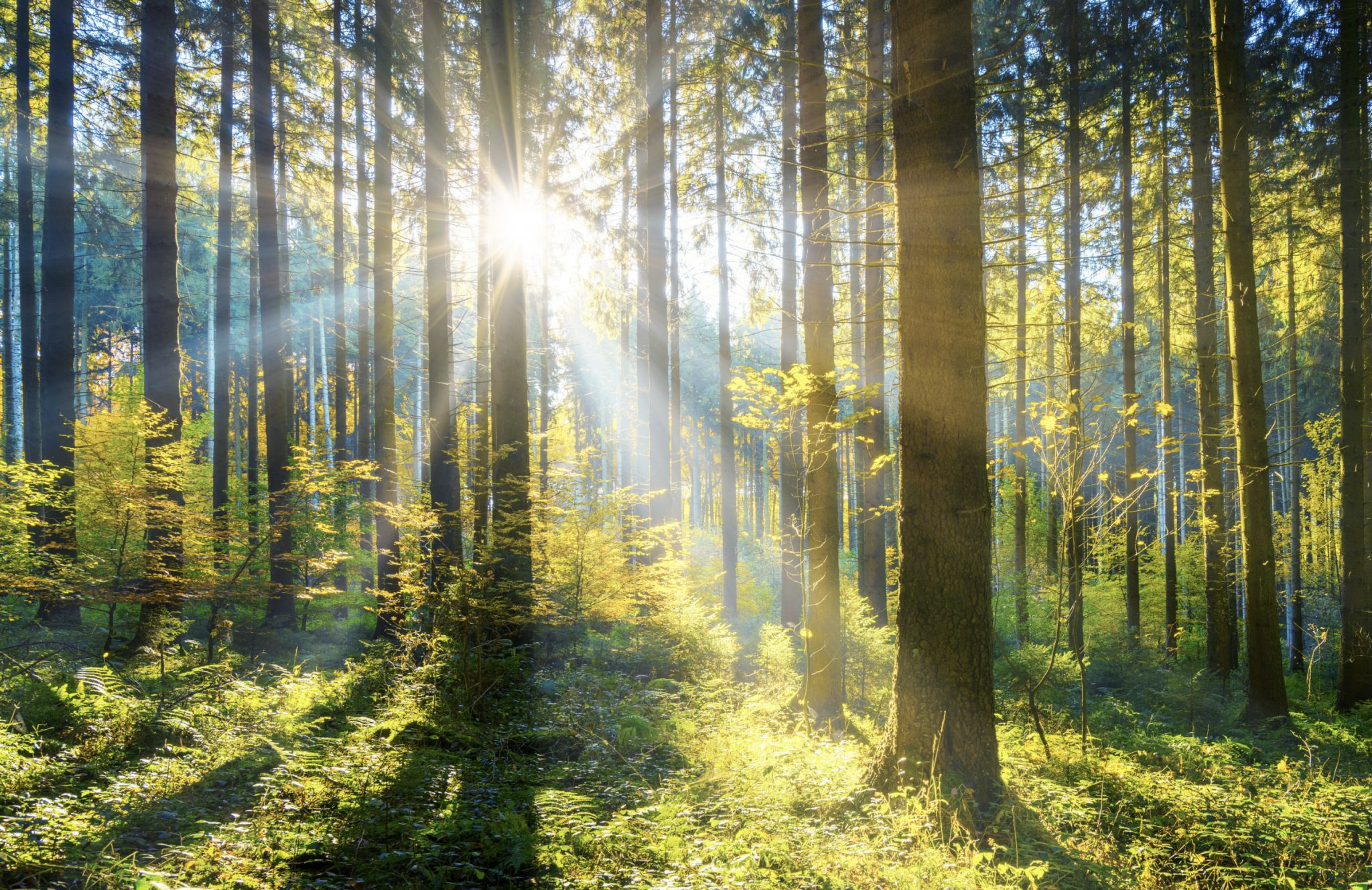 Want To Fight Global Warming Just Plant More Trees For Starters