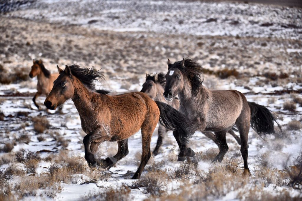 Sulphur wild horse in Southwestern Utah