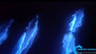 dolphins swim at night, bioluminesce