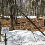 A forest test plot, where snow was removed to see the effects of the lack of this insulating blanket. (Image courtesy of Pamela Templer.)