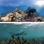 before and after coral bleaching Great Barrier Reef