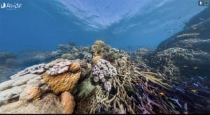 colorful reef before coral bleaching