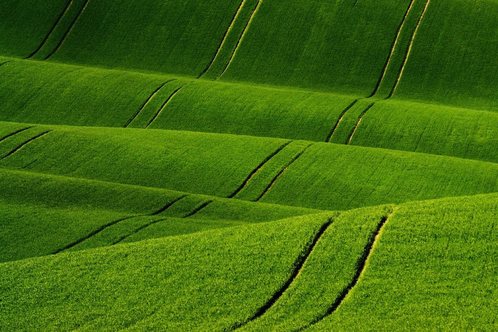 rolling green fields and tractor tracks