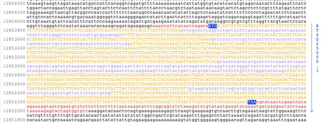 A screen shot of the AMY1 gene from Arabidopsis thaliana, a small flowering plant widely used as a model organism in plant biology. (US government photo)