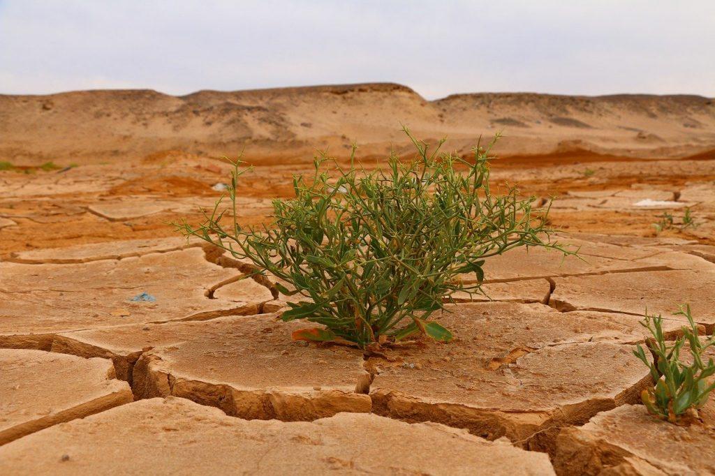 Green plant in desert