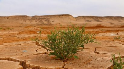 Green plant in desert