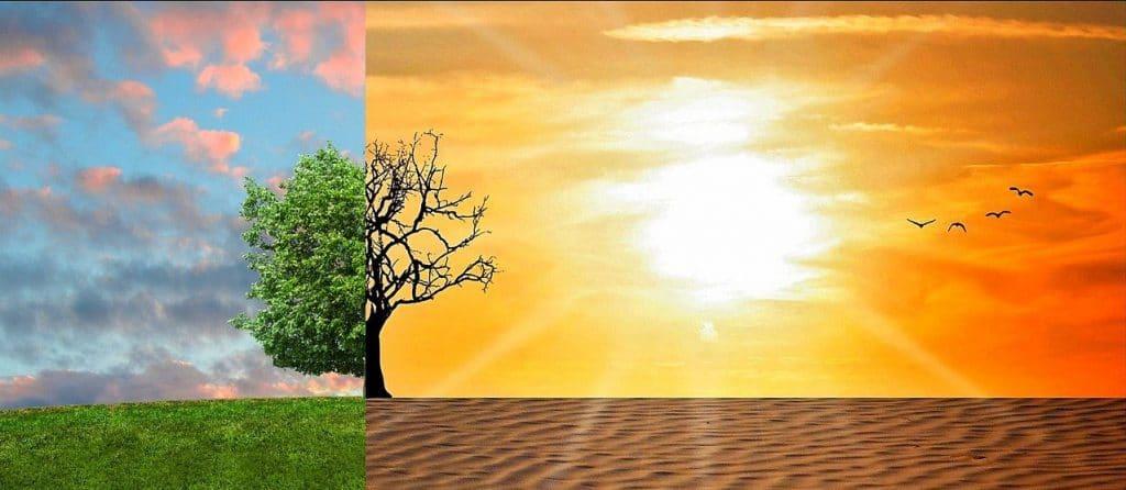 https://thebulletin.org/wp-content/uploads/2021/01/Green-tree-vs-desert-150x150.jpg