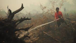 firefighting peat fire Borneo