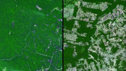 rainforest before and after