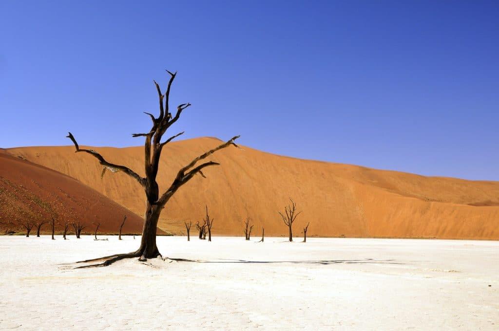 dead tree sand dune