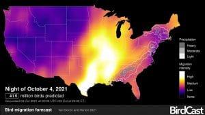 radar image of bird migration