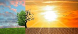 image of green tree and meadow on left and dead tree desert on right